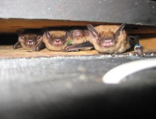 OSLSS Bat Houses for Bug Zappers